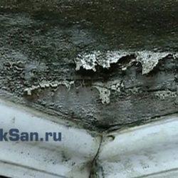 Как избавиться от плесени на стенах и потолке своими руками